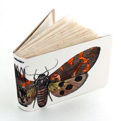 Orange and brown painted moth handmade book by Ruth Bleakley