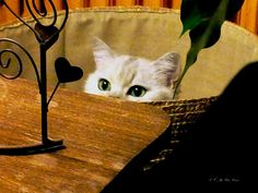 Hello by KerKaya, via Flickr