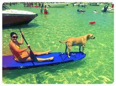Meet, Royal! The pawsome winner of our Sunshine State Dog Photo Contest for August.