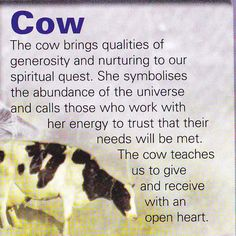 Cow spiritual guide -never really thought of a cow being a guide but ALL animals are guides