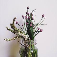 flowers by amelia mancini Green Flowers, Cut Flowers, Wild Flowers, Beautiful Flowers, Flowers Nature, Flower Power, Vase Transparent, Pot Plante, No Rain