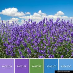 Lavender | Spring | Essential Oils |Color Palette Inspiration. | Digital Art Palette And Brand Color Palette.