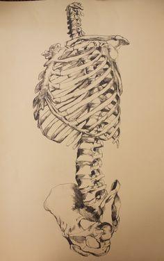 Medical Illustration -Bone Structure-  Jordyn Brenner