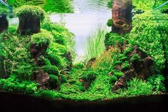 .nice Aquascape
