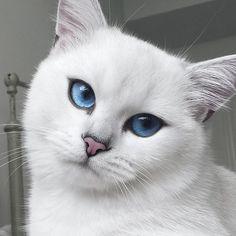 Este gato possuí os olhos mais bonitos que você já viu