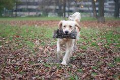 Dummytraining 🐕 . Wir wollen es nicht verschreien, aber momentan läuft das Training richtig super - Tobi hat seine Motivation wieder… Super, Instagram Feed, Motivation, Dogs, Animals, Animales, Animaux, Pet Dogs, Doggies
