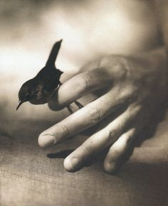 House Wren by Victor Shrager, from The Bird Hand Book, Graphis Press, Nov Show Of Hands, Wren, Great Photos, Black And White Photography, The Magicians, Pet Birds, Monochrome, Art Photography, Creatures