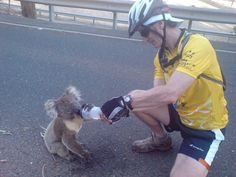 Thirsty Koala wins the internet :) Animals And Pets, Baby Animals, Fluffy Animals, Baby Koala, Koala Bears, Bushfires In Australia, Australia Animals, Cute Funny Animals, Animals Beautiful