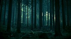 1920 x 1080 px free screensaver wallpapers for dark forest  by Camden Ross for  - TWD