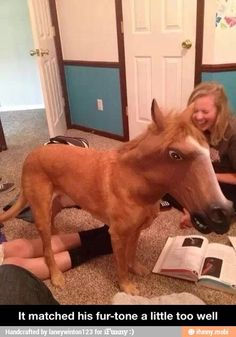I don't know what's funnier, the dog horse or the girl in the background laughing her face off. XD