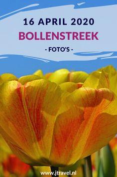 Op 16 april 2020 fietste ik opnieuw naar de Bollenstreek. De reden: de kleurrijke bollenvelden fotograferen. Lees je mee over mijn bezoek aan de Bollenstreek? #bollenstreek #bollenvelden #jtravel #jtravelblog #fotos