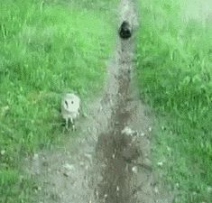 cat / owl... seeing is believing.... what a cool friendship [GiF]