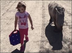 Little girl goes for a stroll with a baby rhino. [video]