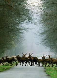 Forest of Compiègne, Oise, Picardy, France. --There must be all kinds of animals living on this land, happy and free. Beautiful Creatures, Animals Beautiful, Deer Family, French Countryside, France Travel, The Great Outdoors, Animal Kingdom, Pet Birds, Woodland