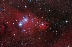 NGC 2264 is a complex of Cone Nebula, the Christmas Tree Cluster, Snowflake Cluster, and the Fox Fur Nebula.