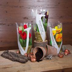#flower #packaging #bouquets #tulp #flowerbulbs