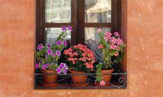 Google Resultados imagen para http://img.jardineriaon.com/wp-content/uploads/2012/05/212.jpeg