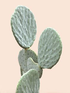 Solo Cactus