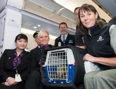 HeatherOne, a baby kākāpō chick, flew to Invercargill with us today to join 2 other chicks at the Department of Conservation's kākāpō rearing unit. New Zealand Wildlife, Conservation, Join, Take That, The Unit, People, Baby, Animals, Animales
