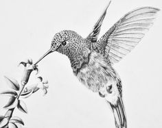 ♥♥♥Only PRINTS for this item are available at this time♥♥♥    ♥Detailed drawing of a cute little hummingbird feeding from a flower  ♥All prints