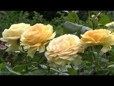 Leo Rojas - The Rose - YouTube