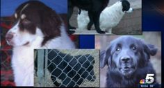 Fire Dallas Animal Services employees that euthanized 4 dogs already promised new homes!   YouSignAnimals.org
