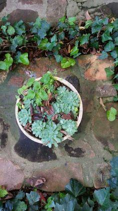 Rock Rose Rock Rose, Planting Seeds, Gardens, Outdoor Decor, Flowers, Plants, Florals, Planters, Flower