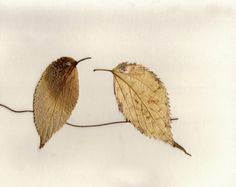 birds made from leaves. Should be nice as a greeting card and ideal for autumn