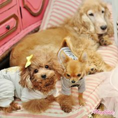 WOOFLINK - Hip designer dog clothes: NAUGHTY GIRL ♥