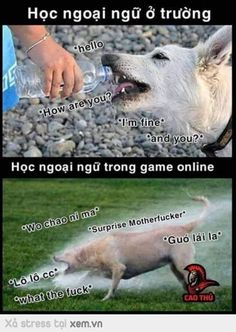 Kết luận chơi game để học tiếng anh giỏi hơn :)) Funny Blogs, Funny Stories, Bts Funny Moments, Comedy Anime, Avatar Couple, Dad Humor, Fresh Memes, No Name, Funny Games