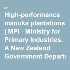 High-performance mānuka plantations | MPI - Ministry for Primary Industries. A New Zealand Government Department.