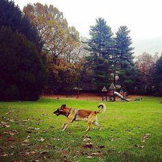 Nel post di oggi @clydetherapy ci parla di sensi e allenamento. Non perdere questo nuovo appuntamento!  Clicca sul link in bio!  @clydetherapy  Sgambettiamo! #clydetherapy #clyde #pettherapy #pettherapydog #dogoftheday #doglife #doglifestyle #dog #malinoislove #malinoislovers #cane #wilddog #fitdog #ilmiocane  #crazydog  #adventuredogsofficial #belgianmalinois #pastorebelga #pastorebelgamalinois #thegreatoutdogs #doglove #giramondo #esploratore #globetrotter #travelpics #landscape…