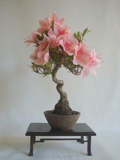 ~ Bonsai ~ 皐月 挿し木から育てて35年以上 2013.6.13 撮影 ~