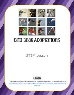 This is a fun lab for learning about adaptations. Students will rotate between stations with different types of 'bird food' and use various tools designated as beaks to decide which one works best. Students will collect and interpret data, and graph their results. Great for science and math!