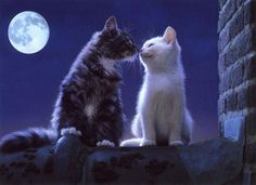 Kissing in the moonlight.