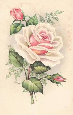 Vintage Images: Vintage roses postcards ~ Peace rose, the kind growing by my grandmother's front door :) Decoupage Vintage, Vintage Diy, Vintage Ephemera, Vintage Cards, Vintage Paper, Vintage Postcards, Flower Images, Flower Art, Vintage Flowers