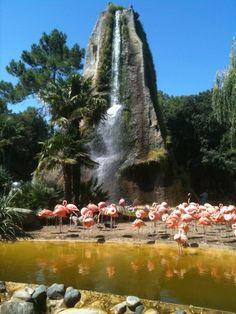 Zoo de la Palmyre à Les Mathes, Poitou-Charentes