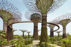 Gardens by the Bay, Singapore #gardens #bay