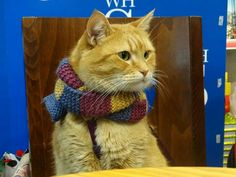 Bob in a lovely scarf