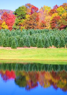 Love the perfect reflection of fall color and Christmas trees in the Nantahala National Forest in NC mountains