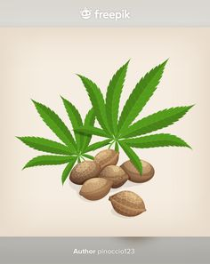 Hemp Seeds, Grass, Leaves, Illustration, Plants, Grasses, Illustrations, Plant, Planets