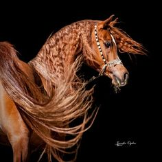 """Click visit site and Check out Cool I love my Horses Shirts. This website is outstanding. Tip: You can search """"your first name"""" or """"your favorite shirts"""" at search bar on the top. #Abyssinian #Cat"""