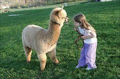 Alpaca &  young girl