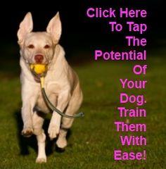 More clicker training