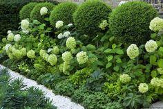 hydrangea garden care Charlotte Rowe G - gardencare Boxwood Garden, Hydrangea Garden, Hydrangea Paniculata, Boxwood Topiary, Hydrangeas, Back Gardens, Outdoor Gardens, Family Garden, Garden Borders