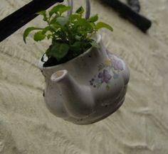 Teapot flowers!