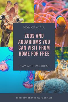 Enjoy something different from home while entertaining and keeping the kids engaged! Here's a list of zoos and aquariums you can visit from home. Educational Activities, Toddler Activities, Learning Activities, Learning Websites, Educational Websites, Educational Technology, Virtual Travel, Virtual Tour, Virtual Field Trips