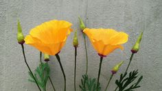 ABC TV | How To Make California Poppy Paper Flowers From Crepe Paper - C...