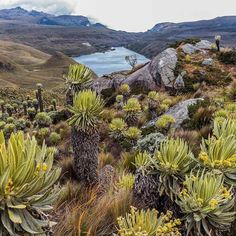 ▷ 50 Lugares Turísticos de Colombia 2020 | Travelgrafía Sierra Nevada, Going On A Trip, Countries Of The World, Cool Pictures, Places To Visit, America, Mountains, Country, Water