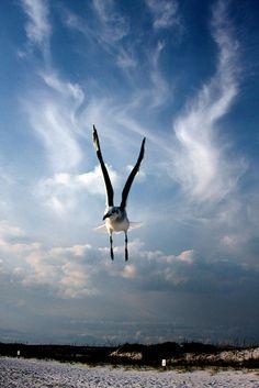 """UP"" Bonnie Blanton photography #beach"